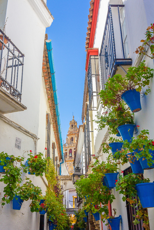 window plant: Typical windows with grilles and decorative flowers in the city of Cordoba, Spain