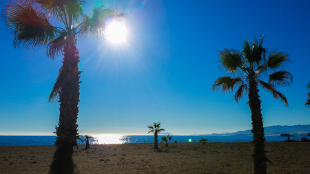 secluded: Secluded beach with palm trees in Almeria, Spain Stock Photo