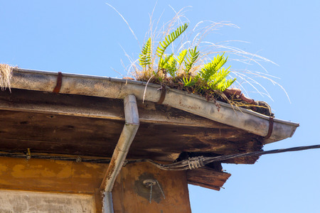 corner house: Old gutter full of weeds Stock Photo