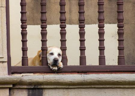 behind bars: Dog sleeping behind bars with a terrace