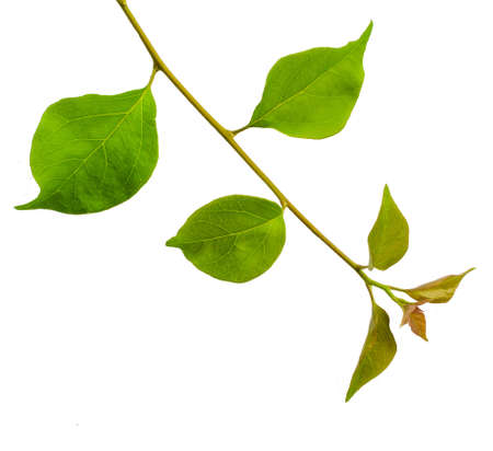 poppet: Stem leaves