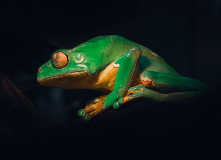 """An atmospheric edit of a Giant Waxy Monkey Frog. It's Giant, it looks """"Waxy"""", it's a Frog ... but I'm pretty sure it's not a Monkey!!"""