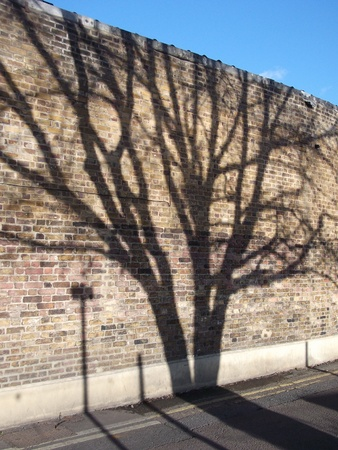 Tree Shadow on Brick Wall