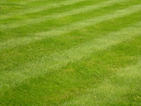 Mown Grass Lawn Stock Photo - 13728100