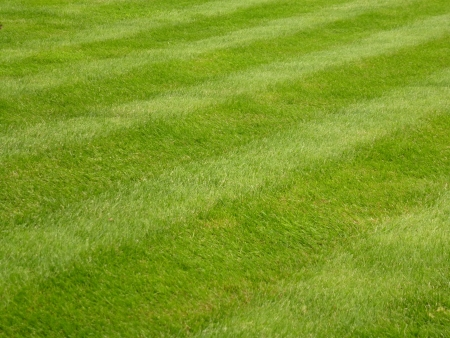Mown Grass Lawn
