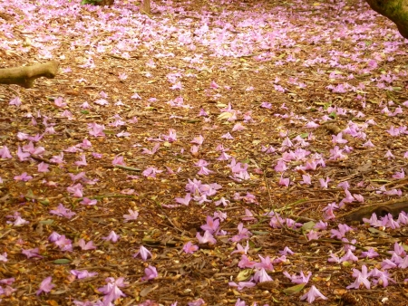 Carpet of Pink Rhododendron Petals