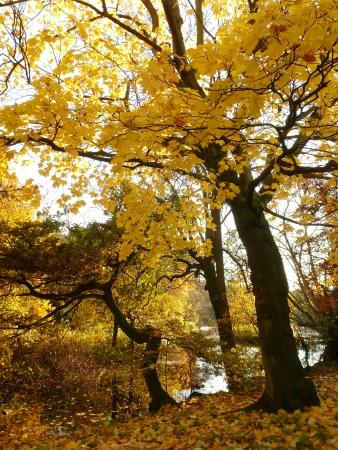 middlesex: Autumn Scene
