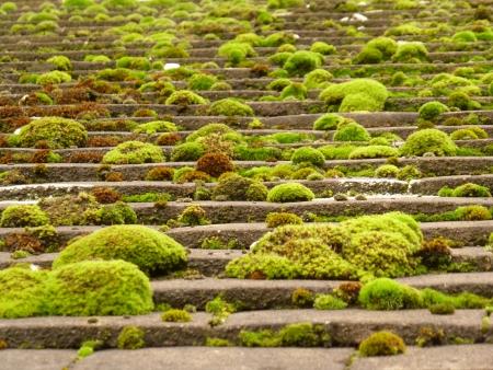 Moss on Roof Tiles Banco de Imagens