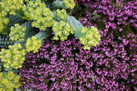 combination: Plant Combination