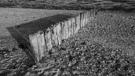 groyne: Groyne Posts at Lepe Beach