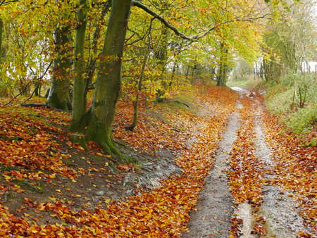 Sunken tree lined path with Autumn leaves in West Berkshire, England