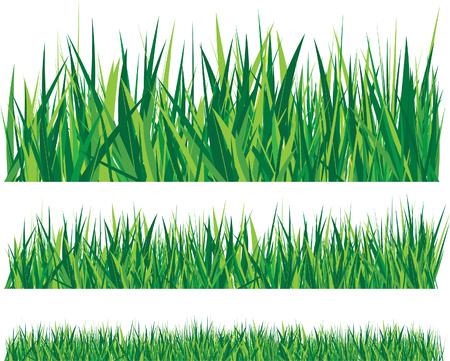lawns: grass