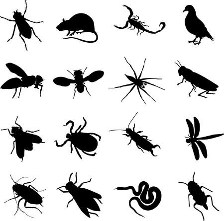 rats: roditori e insetti  Vettoriali