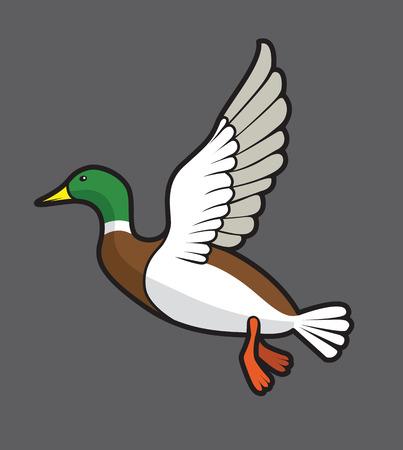 duck feet: flying mallard