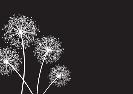 black and white dandelion set Illustration