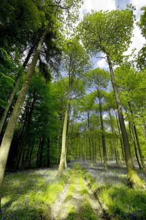 england gloucestershire the forest of dean  photo