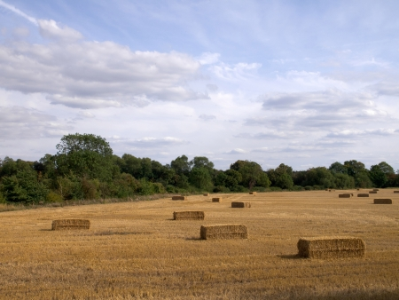 hay bales countryside
