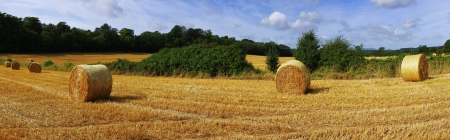 hay bales in a field on a farm photo