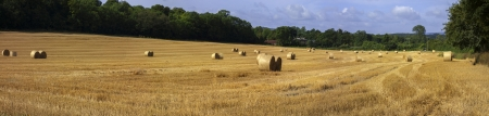 hay bales in a field on a farm Stock Photo - 17333010