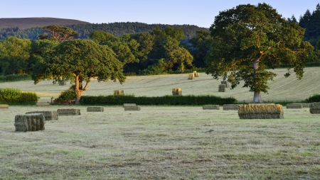 hay bales in a field on a farm Stock Photo - 16401043
