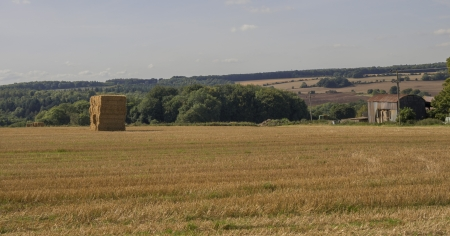 hay bales in a field on a farm Stock Photo - 16400369