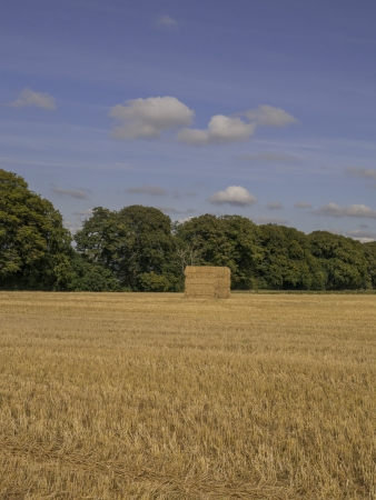 hay bales in a field on a farm Stock Photo - 16512415
