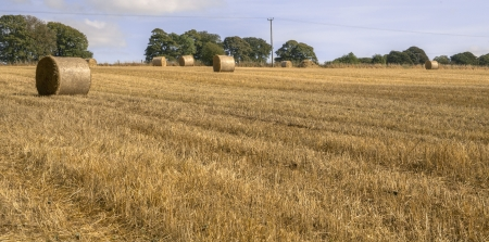 hay bales in a field on a farm Stock Photo - 16401276