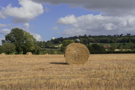 farm land with hay bales Stock Photo - 16292873