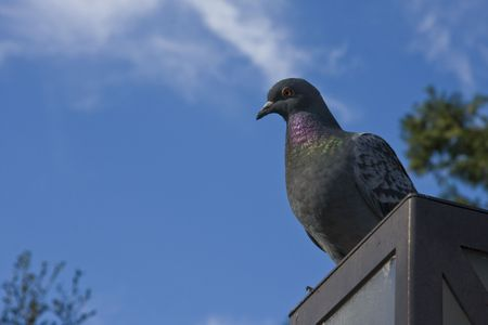A nobel pigeon on top of a pole Stock fotó