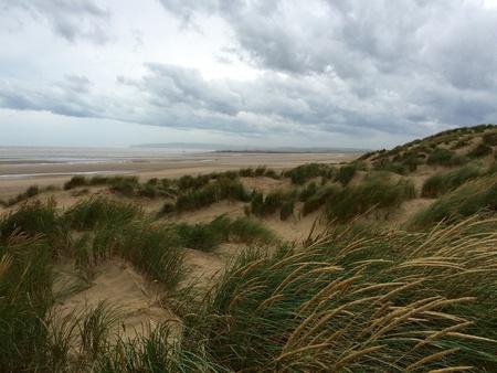 dunes: Beautiful sandy beach dunes