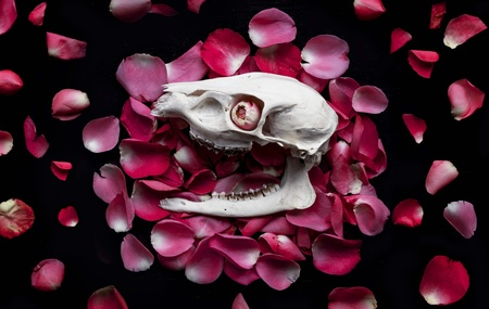 eye: Skull on a bed of petals - rose bud in the eye socket Stock Photo