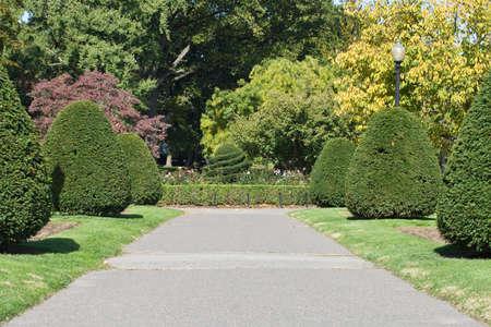 treelined: A tree-lined path in Boston Public Garden.
