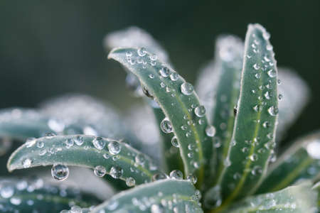Macro of water dew droplets on a shrub during winter. photo