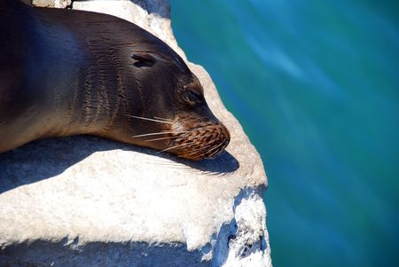 A sea lion relaxes on a pier in the Galapagos photo