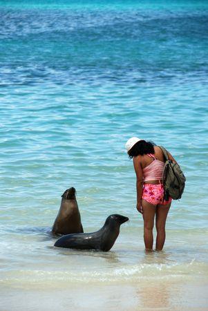 galapagos: Sea lions at Floreana, Galapagos