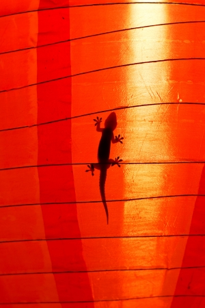 Silhouette of a a gecko inside a Chinese lantern photo