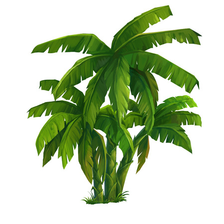 tree illustration: Painting of a banana tree