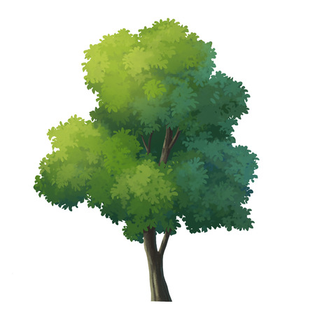 tree isolated: tree for cartoon isolated on white background