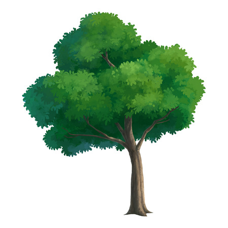 forest trees: illustration of tree for cartoon isolated on white background