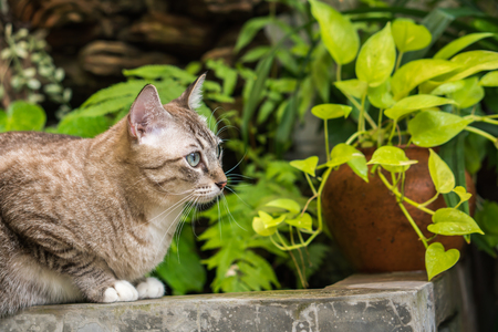 gray cats staring at something. Stock Photo