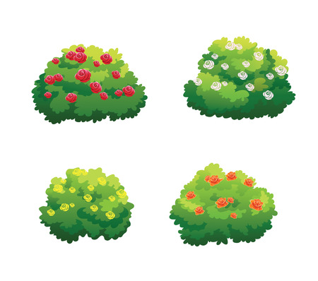 Illustration of bush for decorate the garden beautifully.