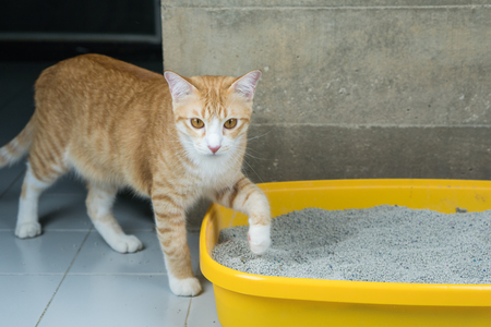 The excretion of a cat at the sandbox in the morning. Banco de Imagens - 98305528