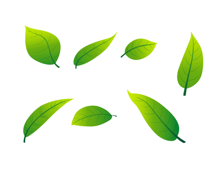 Green leaves have a white background for illustrations, beautifully decorated. Illustration