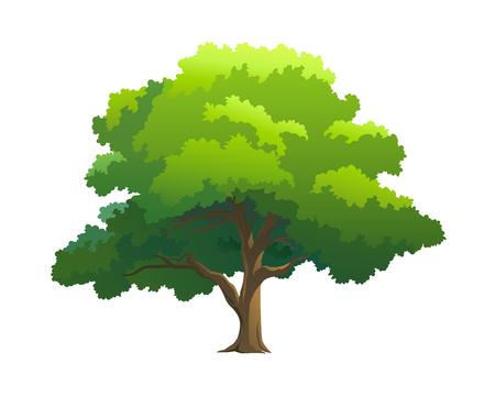 vector illustration for tree on white background