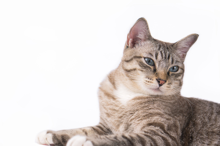 Cute cat staring at something on a white background. Reklamní fotografie
