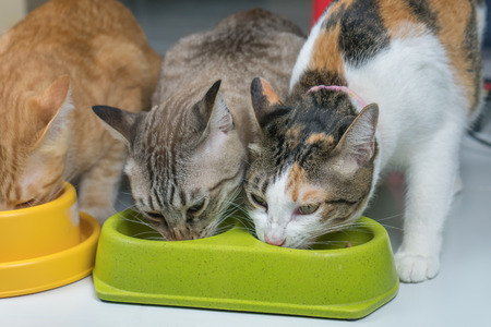 The cat is eating food in a green bowl on the ground. Reklamní fotografie