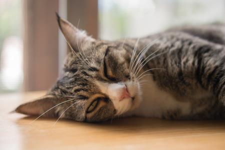 Cats are sleeping near the window, look very happy. Reklamní fotografie