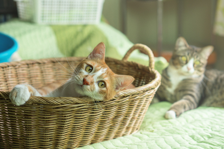Cat playing in the basket It looks this way.