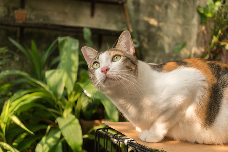Beautiful cat in the garden in front of the house. Reklamní fotografie - 124644585