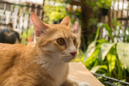 Beautiful cat in the garden in front of the house. Reklamní fotografie - 124644586
